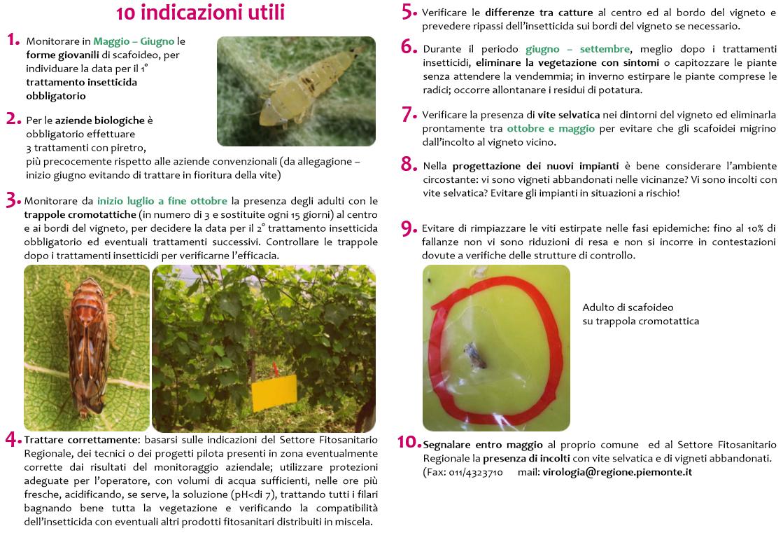 Manuale istruzioni lotta integrata alla Flavescenza dorata - Regione Piemonte