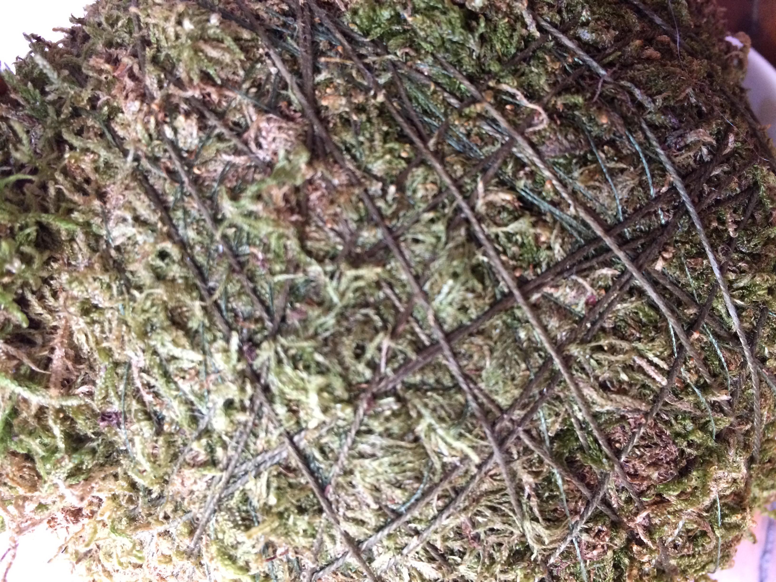 Kokedama: la sfera di fango viene avvolta da un filo di cotone