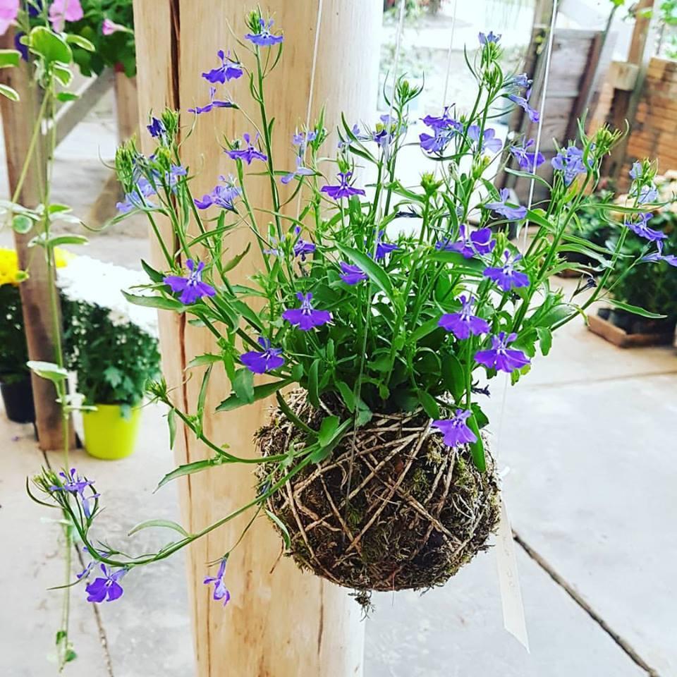 Kokedama con fiori