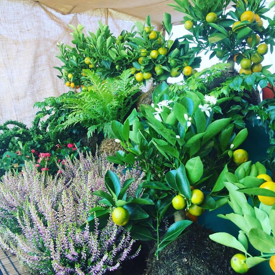 Varianti di Kokedama con piante diverse