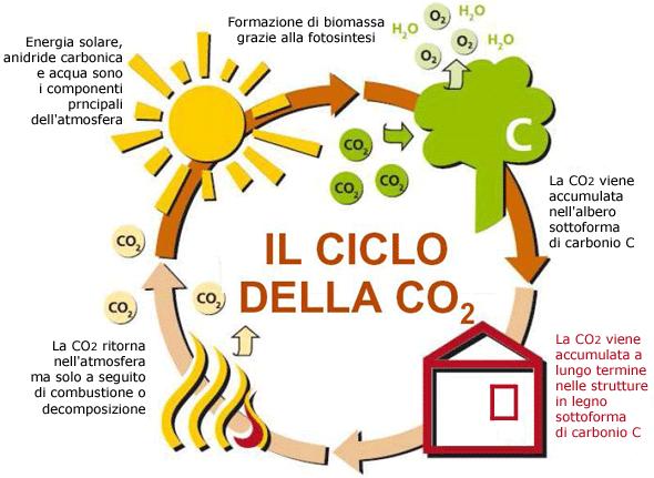 Il ciclo dell'anidride carbonica