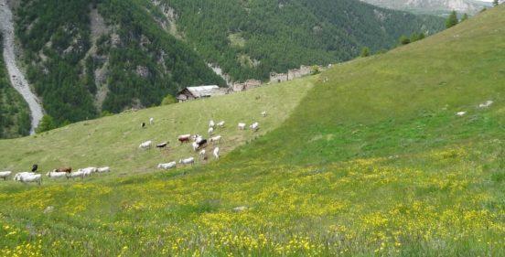 Il Piano Pastorale Foraggero
